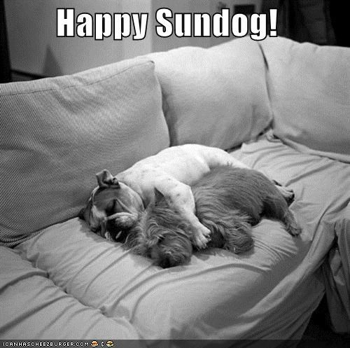 black and white bulldog cuddling friends friendship happy happy sundog love silky terrier sleeping spooning Sundog
