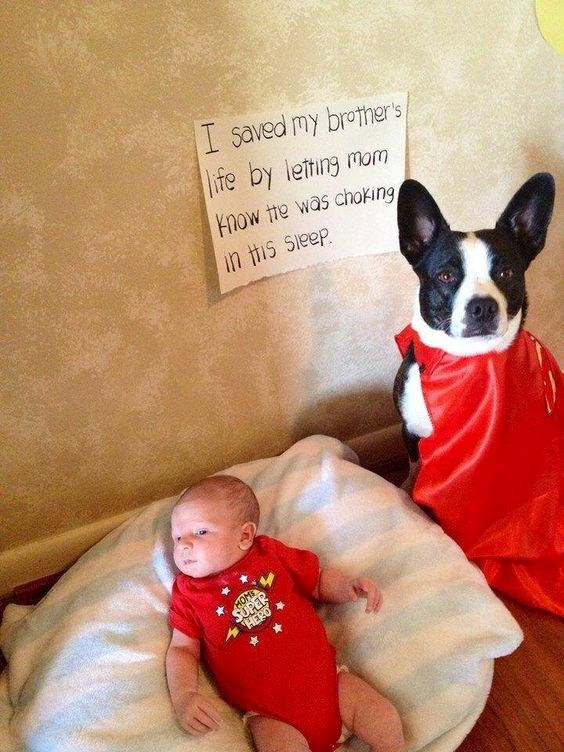 dog in a superhero cape next to sign saying he saved a baby's life
