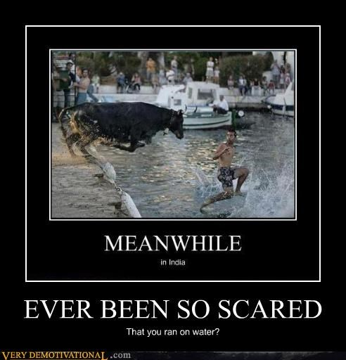 bull,running,scared,water