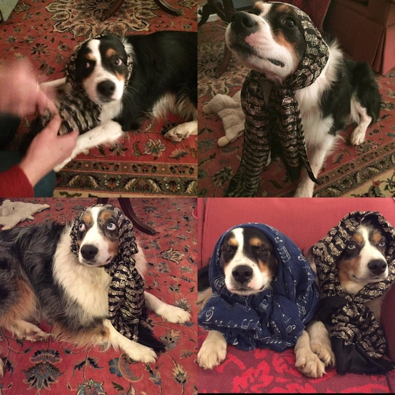 dogs wearing scarves like Russian grandmas
