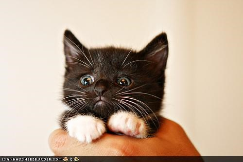 cyoot kitteh of teh day,frown,hand,hold,Sad,scared,what has been seen,worried