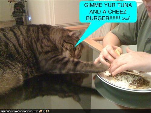 Cheezburger Image 4428292608