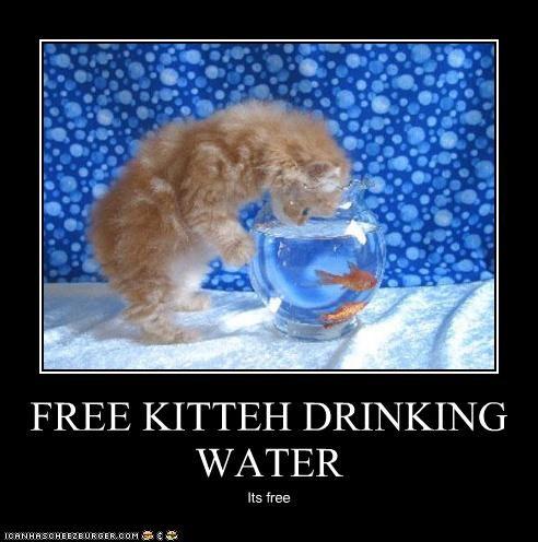 FREE KITTEH DRINKING WATER Its free