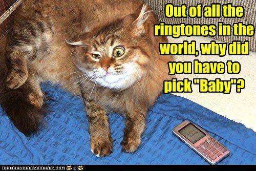 baby caption captioned cat choice decision do not want justin bieber pain ringtones song unhappy - 4428338688