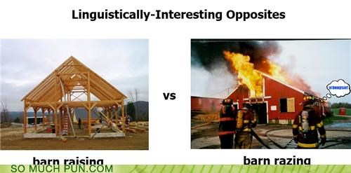 barn,homophones,interesting,linguistics,opposites,racing,raising,razing,similar sounding