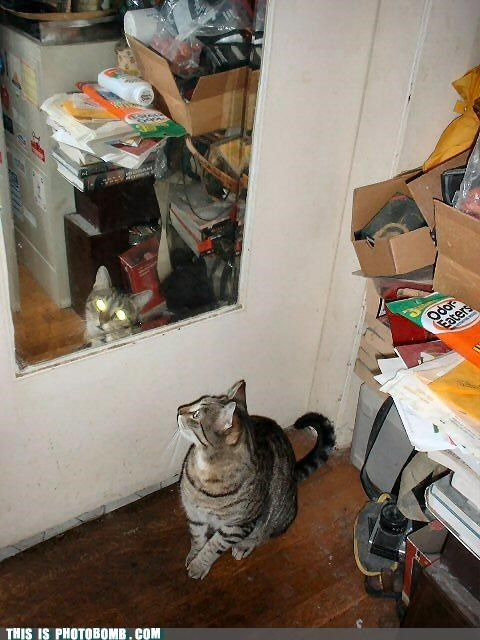 animals awesome Cats Caturday evil photobomb - 4429464576