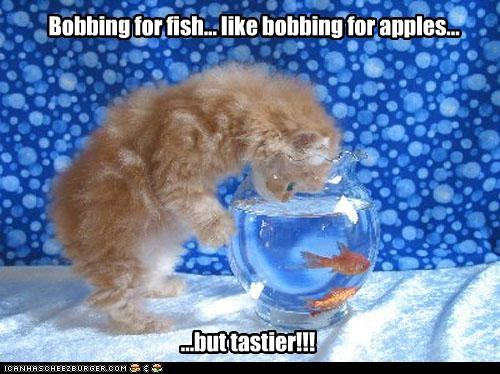 Bobbing for fish... like bobbing for apples... ...but tastier!!!