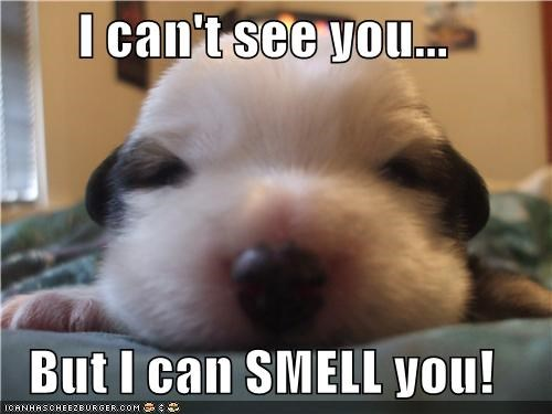 but cant closed eyes puppy see smell squee whatbreed you - 4429751808