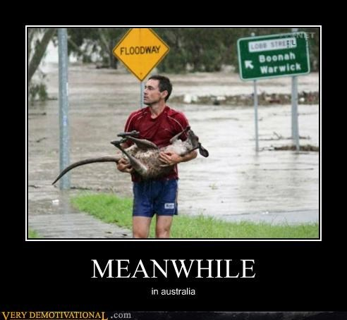 yikes kangaroo Meanwhile floodway - 4429778432