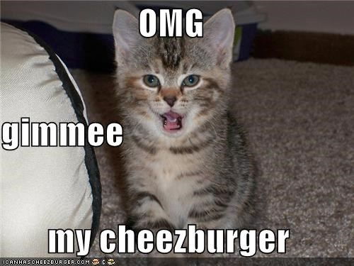 Cheezburger Image 4429958656