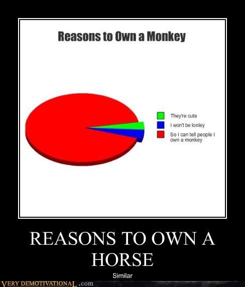 pet monkey horse - 4430431488