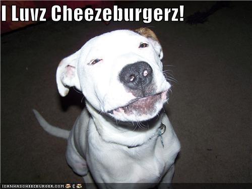 Cheezburger Image 4430627328
