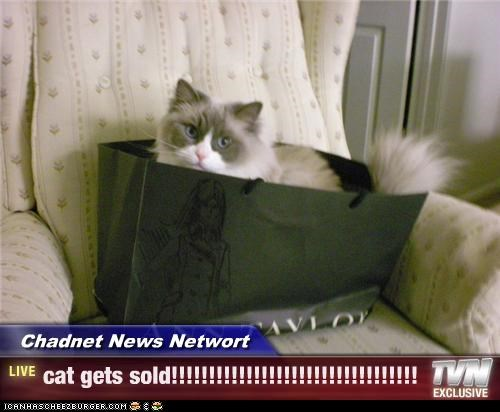 chadnet news networt cat gets sold