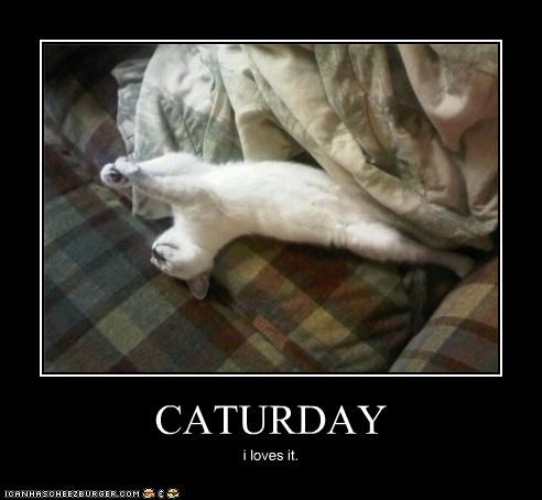 caption captioned cat Caturday I love it love sleeping