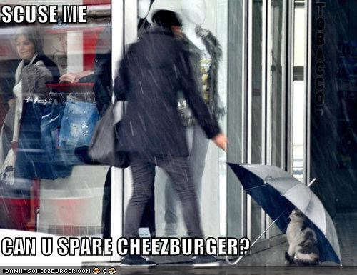 Cheezburger Image 4431782912