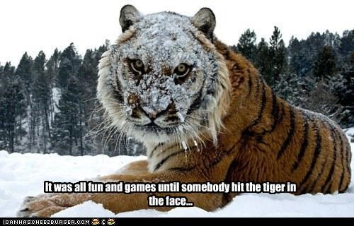 It was all fun and games until somebody hit the tiger in the face...