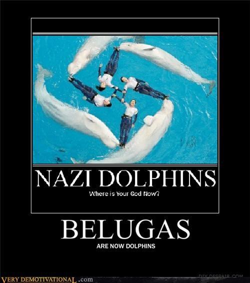 dolphin beluga whale - 4432766208