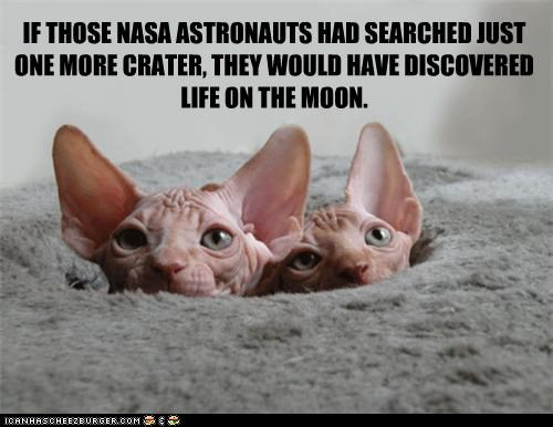 caption,captioned,cat,Cats,crater,discovering,discovery,hypothetical,life,moon,more,one,peeking,searching,sphinx
