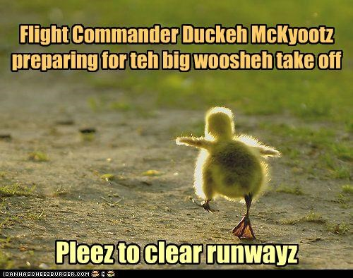 baby,caption,captioned,commander,duck,duckling,flight,flying,preparing,running,takeoff
