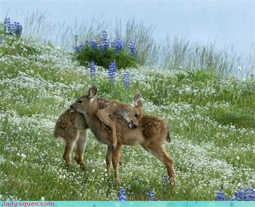 deer fawns flowers hug meadow - 4434775040