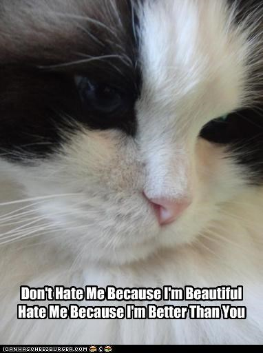 Don't Hate Me Because I'm Beautiful Hate Me Because I'm Better Than You