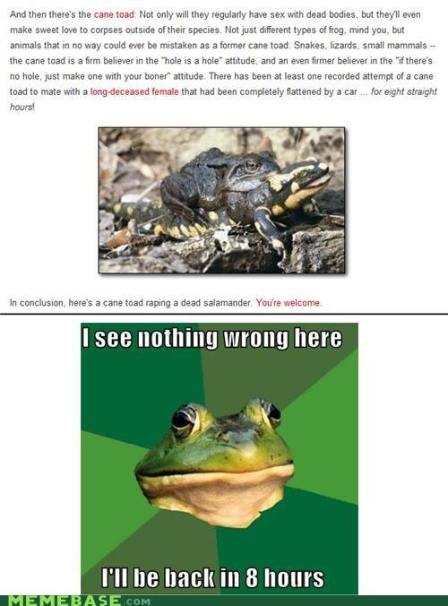 foul bachelor frog - 4435294464
