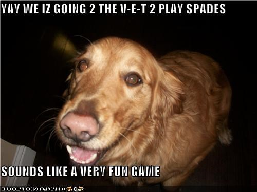 confused,destination,en route,excited,fun,game,going,golden retriever,ignorance,oblivious,playing,sounds,spade,spades,vet,v-e-t