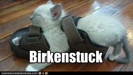 birkenstock caption captioned cat Hall of Fame kitten napping pun sandal sleeping stuck - 4435800576