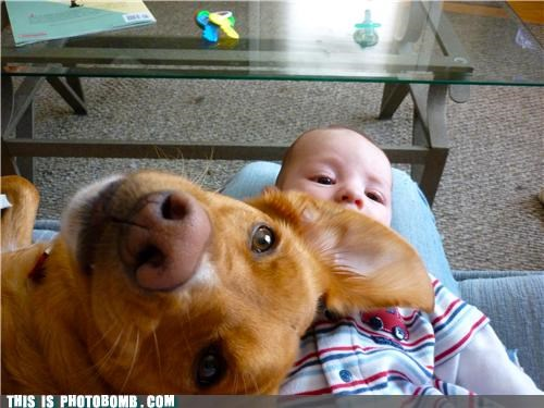 animals Babies cute jk photobomb Sundog - 4436027392