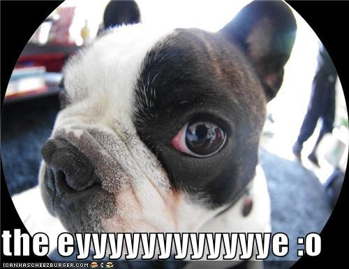 Cheezburger Image 4436492288