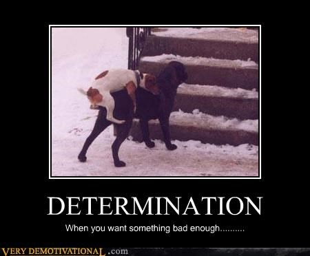determination dogs humping