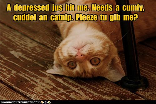 asking caption captioned cat catnip comfy cuddle depressed Hall of Fame help hit need please request - 4436911616
