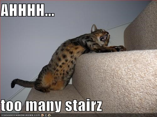 cute animals, cat meme, cat too lazy to climb stairs