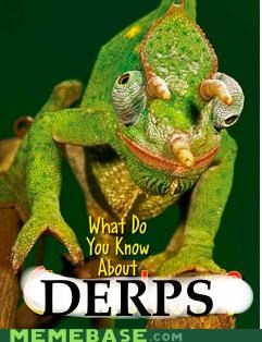 chameleon critters cute derps eyes what do you know what you know - 4437056000