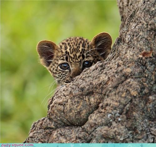 afraid baby hiding monster ocelot question thing where the wild things are wild - 4437111296