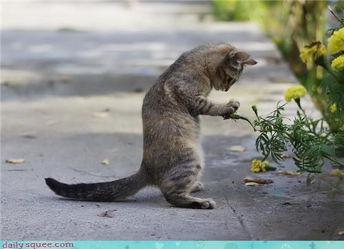 cat ending Flower game he loves me he loves me not love one one by one opposites options other outcome petals picking stakes - 4437175808