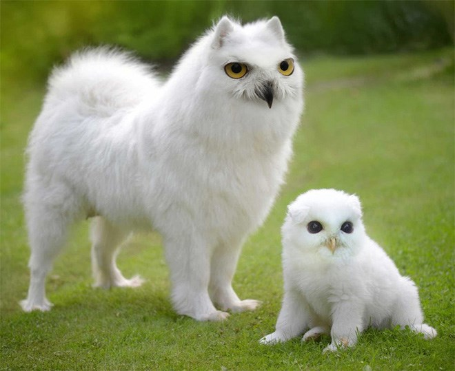 Battle dogs cute photoshop Owl funny - 4437253