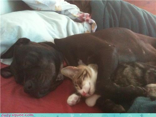cat,cuddles,cuddling,dogs,friends,friendship,nap,nap time,napping,naps,sleeping,snuggling,togetherness