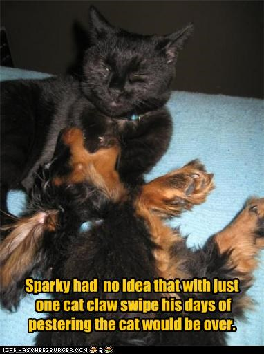Sparky had no idea that with just one cat claw swipe his days of pestering the cat would be over.