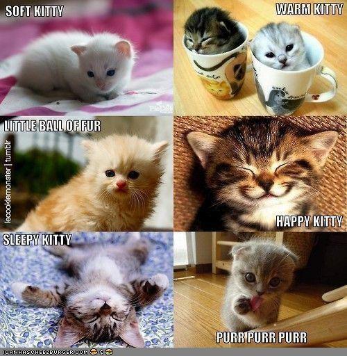 cute Hall of Fame happy lots of cats lyrics song the big bang theory TV - 4437661696