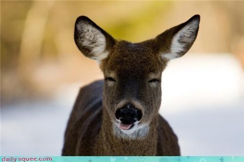 cheeky deer funny joke tongue - 4437792000