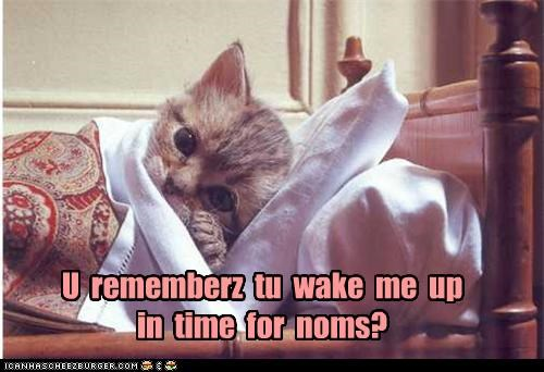 bed caption captioned cat kitten nap napping noms promise remember sleeping time wake me waking - 4438001920