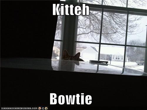 Kitteh  Bowtie