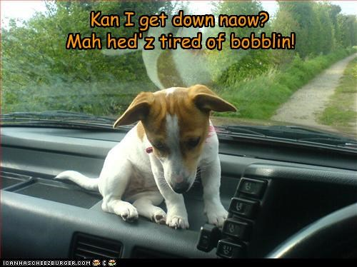 Kan I get down naow? Mah hed'z tired of bobblin!