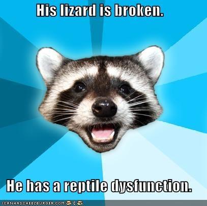 dysfunction,Lame Pun Coon,lizard,reptile