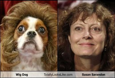 actress,animals,dogs,susan sarandon,wig