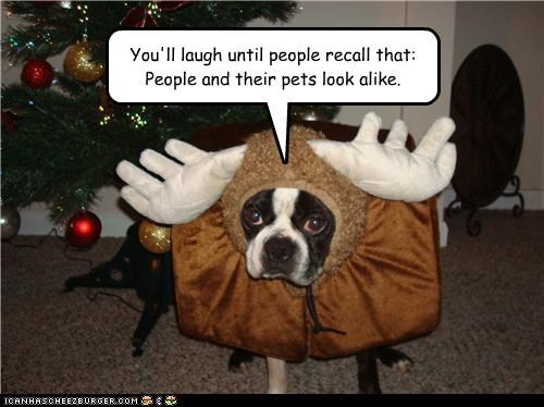 antlers costume dressed up french bulldogs humiliated people pets remember resemblance revenge rule