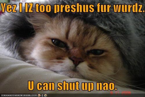 agreement caption captioned cat Precious request sarcasm shut up too words - 4439892224