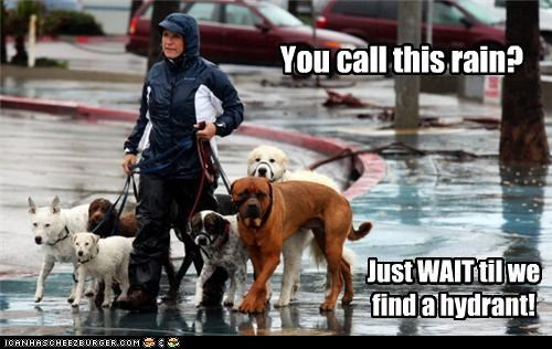 You call this rain? Just WAIT til we find a hydrant!