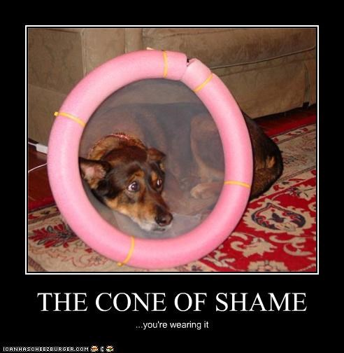 THE CONE OF SHAME ...you're wearing it